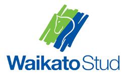 Waikato-Stud-250-150